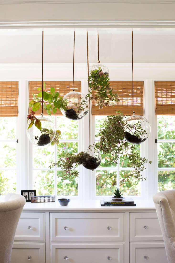 A 7-inch flat bottom Clear Hanging Glass Ball Terrarium is \$\1\2.99 from Save on Crafts. A smaller, 4-inchHanging Glass Terrarium is \$4.99.