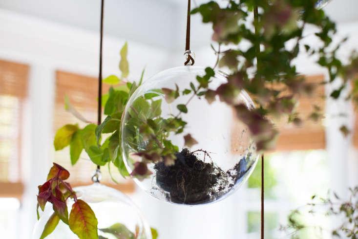 Fuchsias in glass terrarium balls.