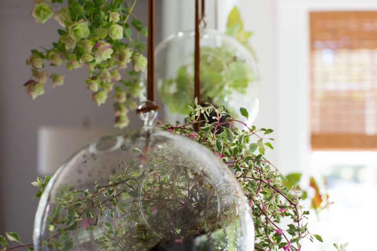 We hung our terrariums from loops ofleather cord; a \2-yard pack of Suede Leather Cord is \$5.49 from Joann Fabric.