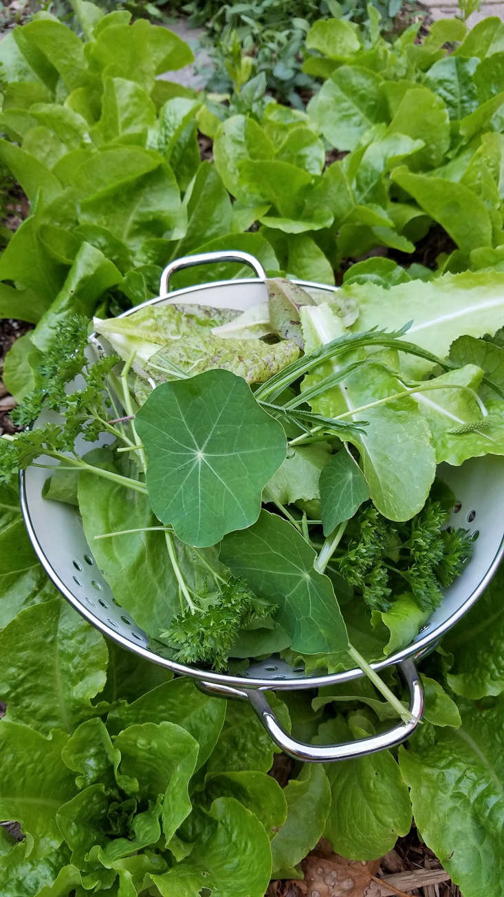 Fresh garden salad by Marie Viljoen