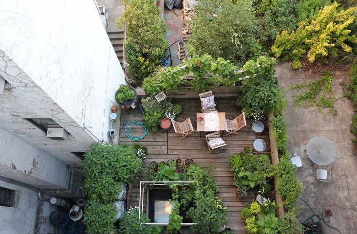 Harlem terrace garden by Marie Viljoen