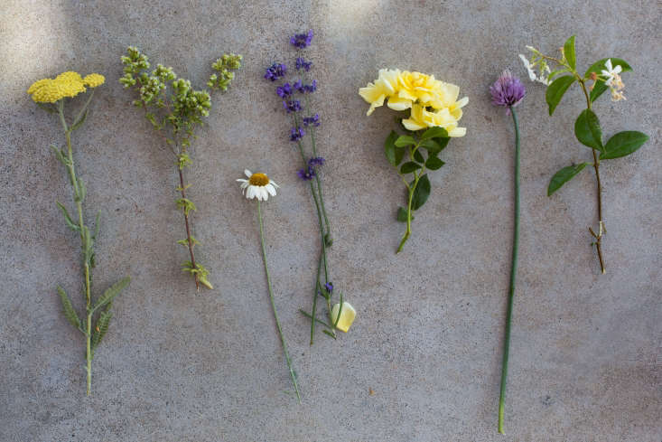From Left, yarrow, clover, chamomile, lavender, rose, chive, and jasmine.
