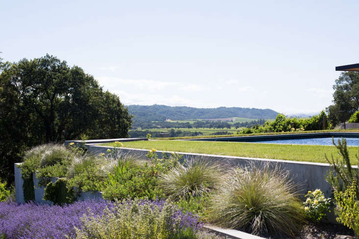 Turf grass feels cooler underfoot than most hardscape surfaces. But be aware that turf is thirsty and will require regular irrigation. Photograph by Mimi Giboin for Gardenista. For more, see Landscape Architect Visit: Vineyard Views in Healdsburg&#8