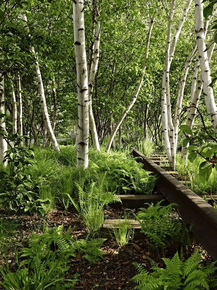 A leafy glade of gray birches and ferns is only a short distance above the crowds of museum goers at the Whitney Museum and the noisy commercial traffic on Washington Street.