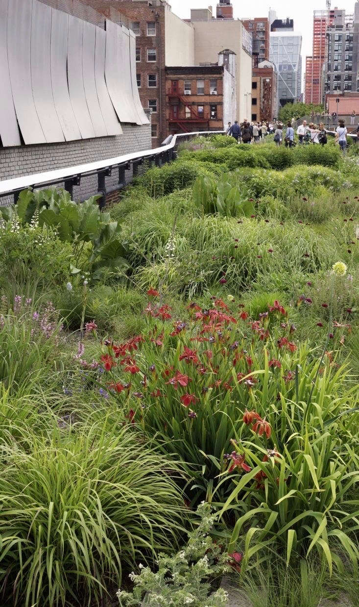 Although Oudolf is known for emphasizing form over flowers, many of his selections, such as the Copper Iris in the Chelsea Grasslands garden, provide dramatic bursts of color.