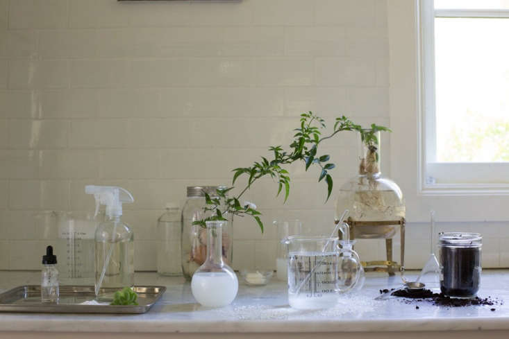See Homemade Remedies: 5 Natural Garden Helpers for step-by-step instructions for making weed killer, fertilizer, soil amendments, and leaf spray using everyday household ingredients. Photograph by Mimi Giboin.