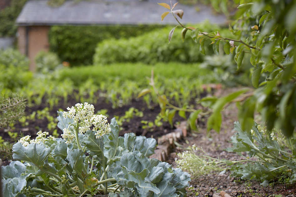 """Pawson has repurposed the old Victorian vine house as a warm space for cucumbers, aubergines, and peppers and taken over the lower garden for polytunnels. """"It's wonderful to see the walled garden gone back to 0percent vegetables and soft fruit,&#8"""