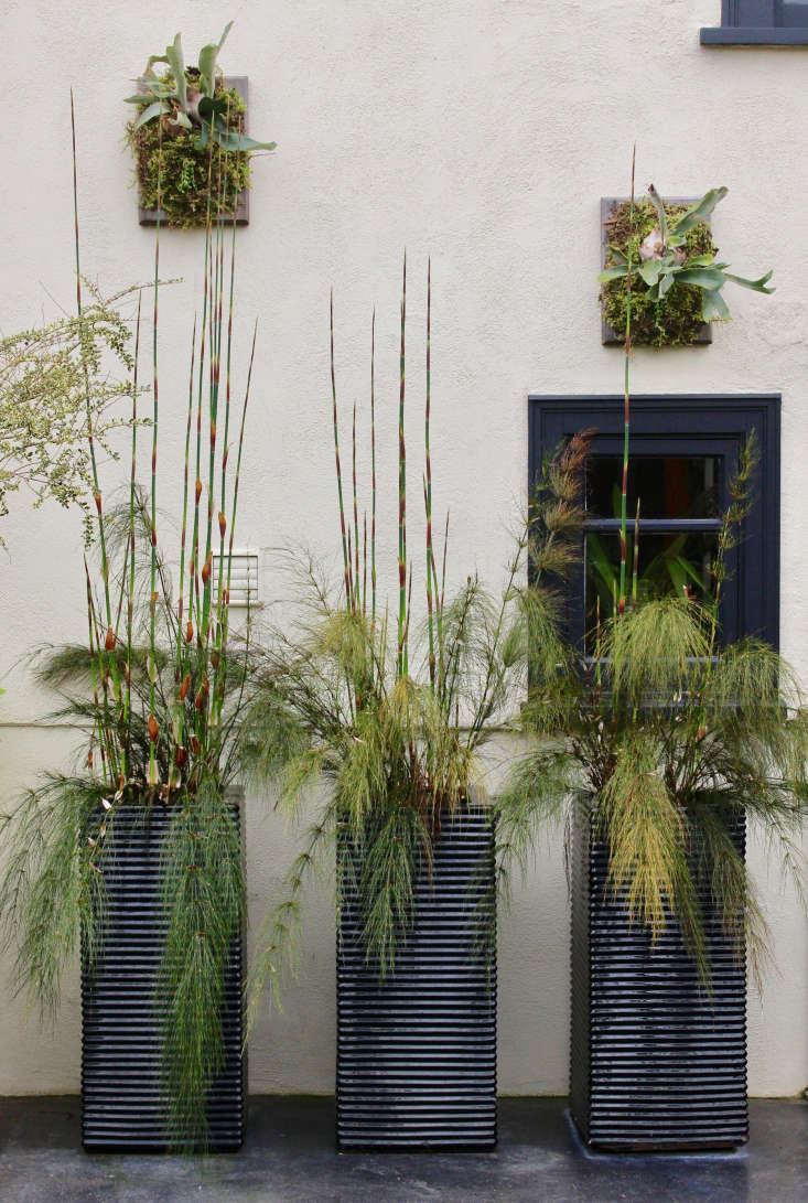 To add interest to anorth-facing wall in the courtyard, Gergel uses tall planters with Elegia capensis, a member of the Restionaceae family. This group of plants is endemic to the Cape region of South Africa.