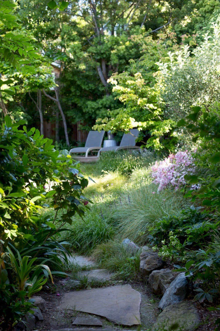 In Mill Valley, California homeowners Catherine and Greg Stern replaced turf grass with a backyard meadow of Carex pansa, Festuca mairei, and clumps of Sesleria autumnalis 'Greenlee'. Photograph by Mimi Giboin.