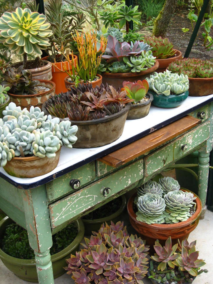 An old enamel-topped table in the greenhouse offers a practical and pretty setting for a collection of succulents.