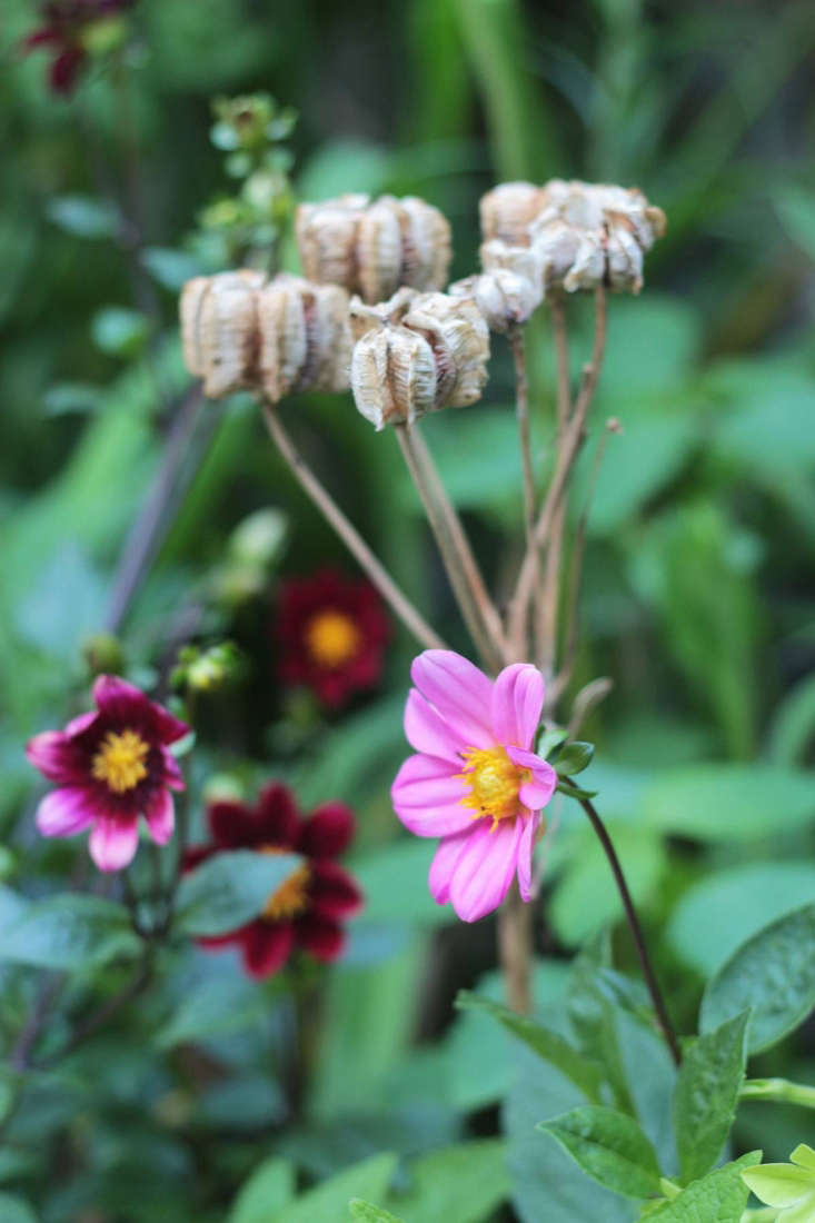 Dahlias and fritillaria seedheads by Marie Viljoen