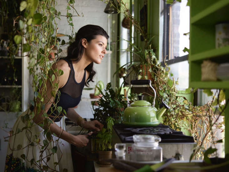In her Brooklyn kitchen, houseplant enthusiast Summer Rayne Oakes clusters plants on countertops, shelves, and tabletops.Photograph courtesy of@homesteadbrooklyn.