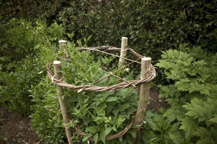 Hazel poles with willow circles provide a column for herbaceous clematis to grow through, at Coton Manor Garden.