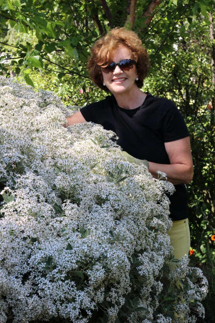 Barbara Gergel with Olearia in bloom.