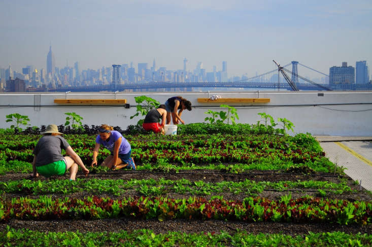 Farmers tendrows of salad greens at Brooklyn Grange&#8\2\17;s Navy Yard location, \1\2stories above the East River.
