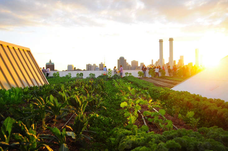 Brooklyn Grange Farm hosts events and dinners throughout the year, including this year&#8\2\17;s Compost Dinner on July \1\2.