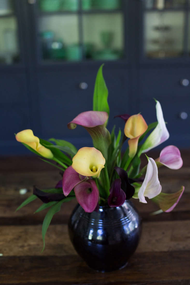 Calla lilies look like an explosion of fireworks in the vase. But be warned: they are a short-lived cut flower; after two or three days the colorsstart to lose their vibrancy.
