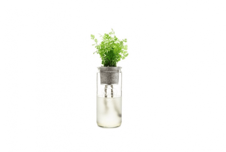 An Organic Cilantro Eco Planter kit comes with a glass jar, stainless steel net pot, a growing medium of recycled glass, a cocoa pith disk, wick, and plant food. It is $30 from Modern Sprout.