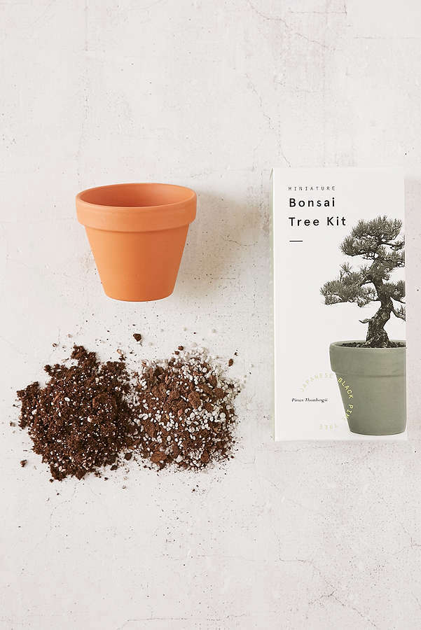 A Miniature Indoor Bonsai Tree Kit comes with pre-planted tree seeds, a terra cotta pot, compost, and growing instructions. It is $ from Urban Outfitters.