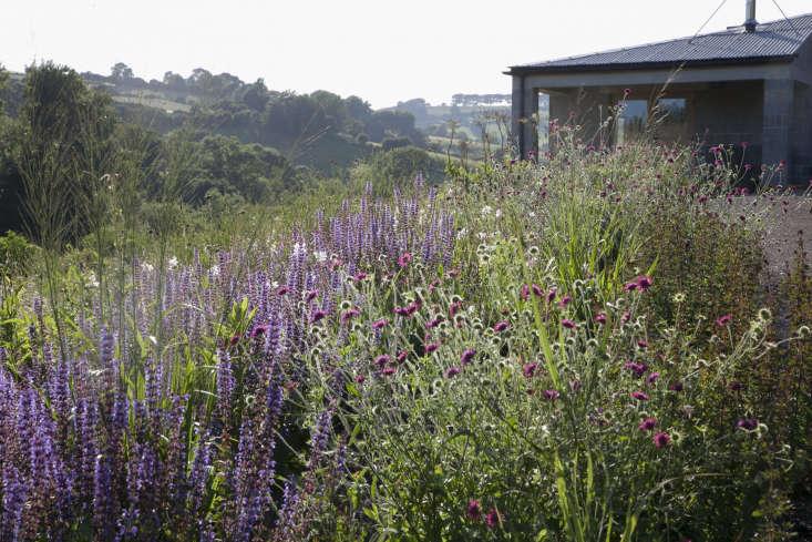 Flowering perennials in Dan Pearson&#8