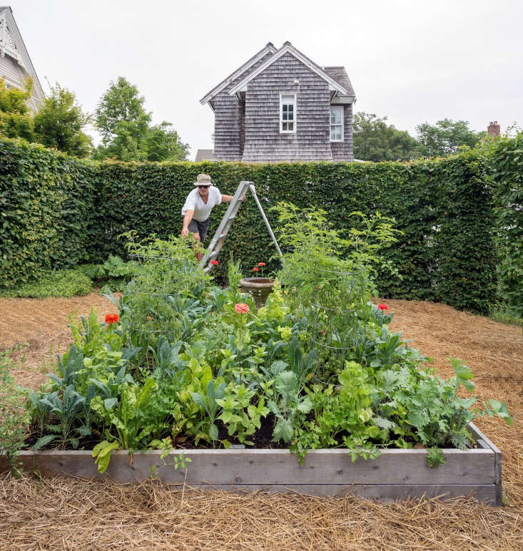 Photograph by Matthew Williams for Gardenista. See more of this Cape Cod edible garden in our new book, Gardenista: The Definitive Guide to Stylish Outdoor Spaces.