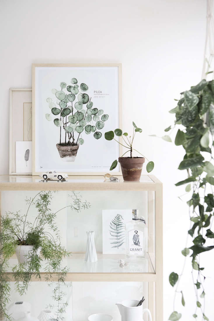 Shop shelves hold among other things, a potted pilea and Koster&#8