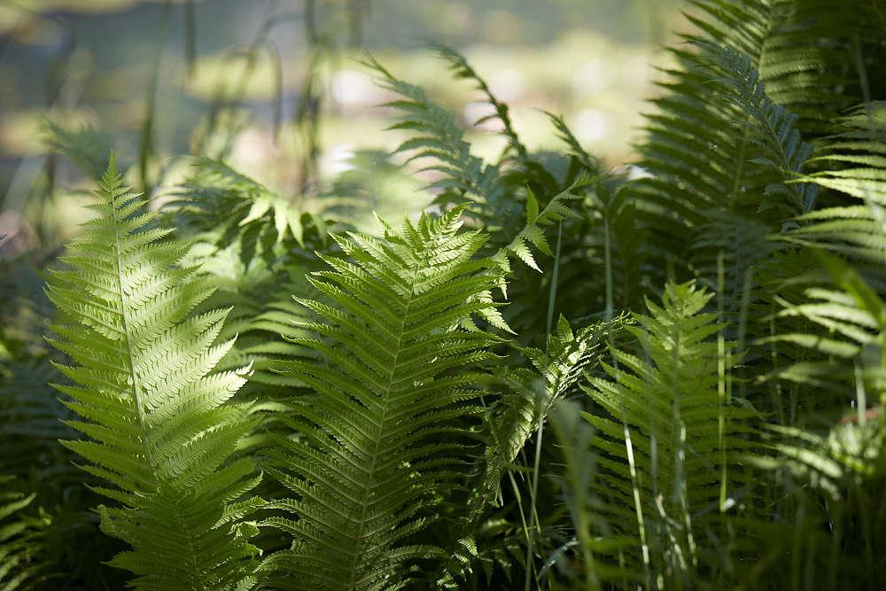 Add evergreen interest with shade-loving ferns.