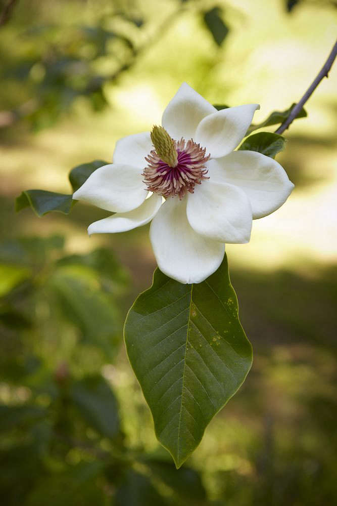 Choose flowering trees to add color to the landscape in springtime.