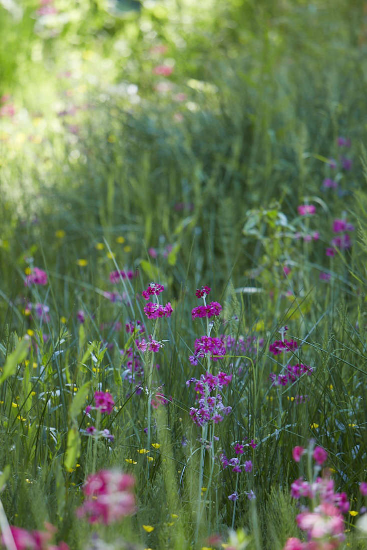 Plant swaths of color with spring wildflowers.