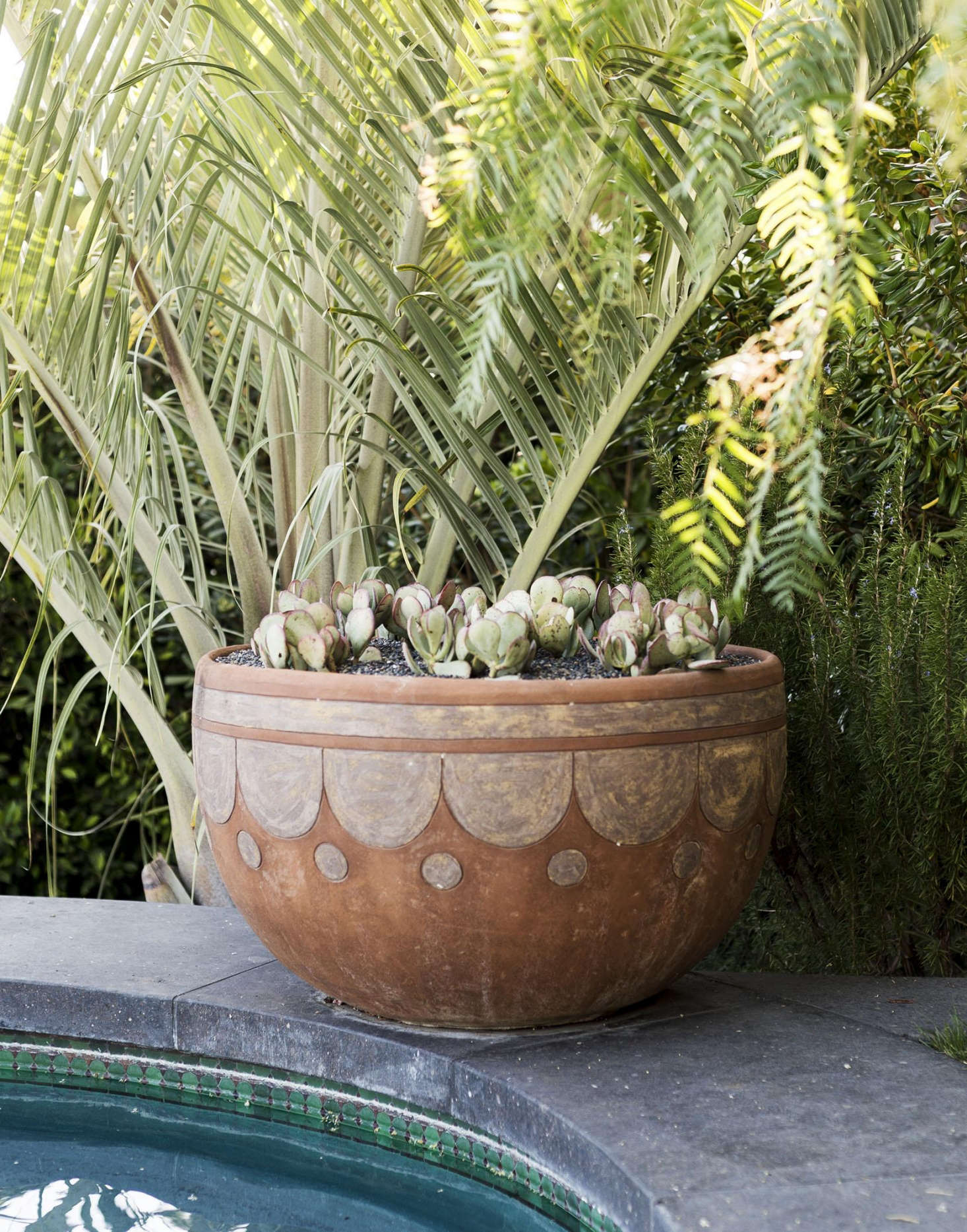 Swimming Pools 11 Best Landscape Plants For Water S Edge Gardenista