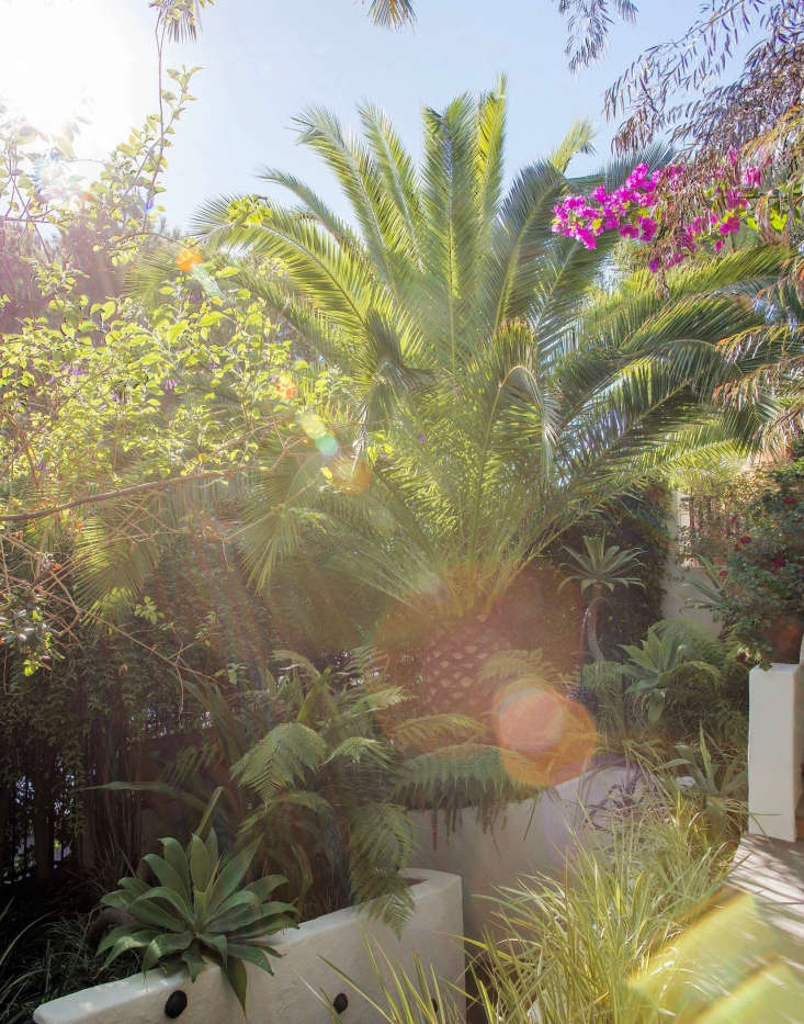 Tropical plants are suitable for a swimming pool area in a warm climate such as Los Angeles.