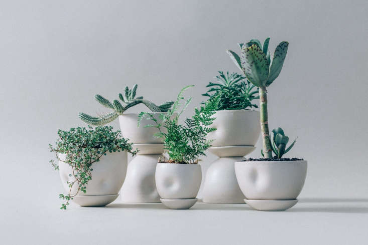 The collection, with soft dimples and small dishes that cup the bottoms of the planters.