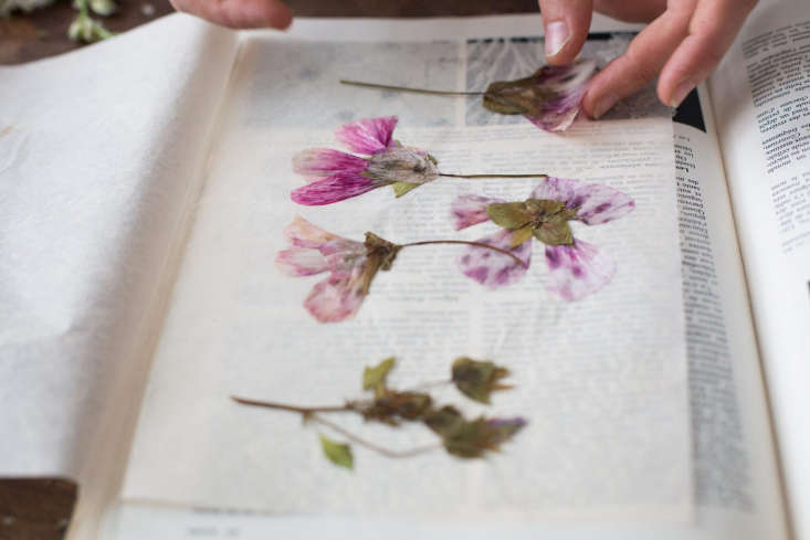 For more, seeDIY: Tips to Press Flowers from MR Studio in London.