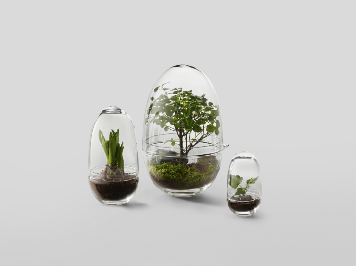 A trio of Grow terrariums; each is scaled to complement either of the other two sizes.