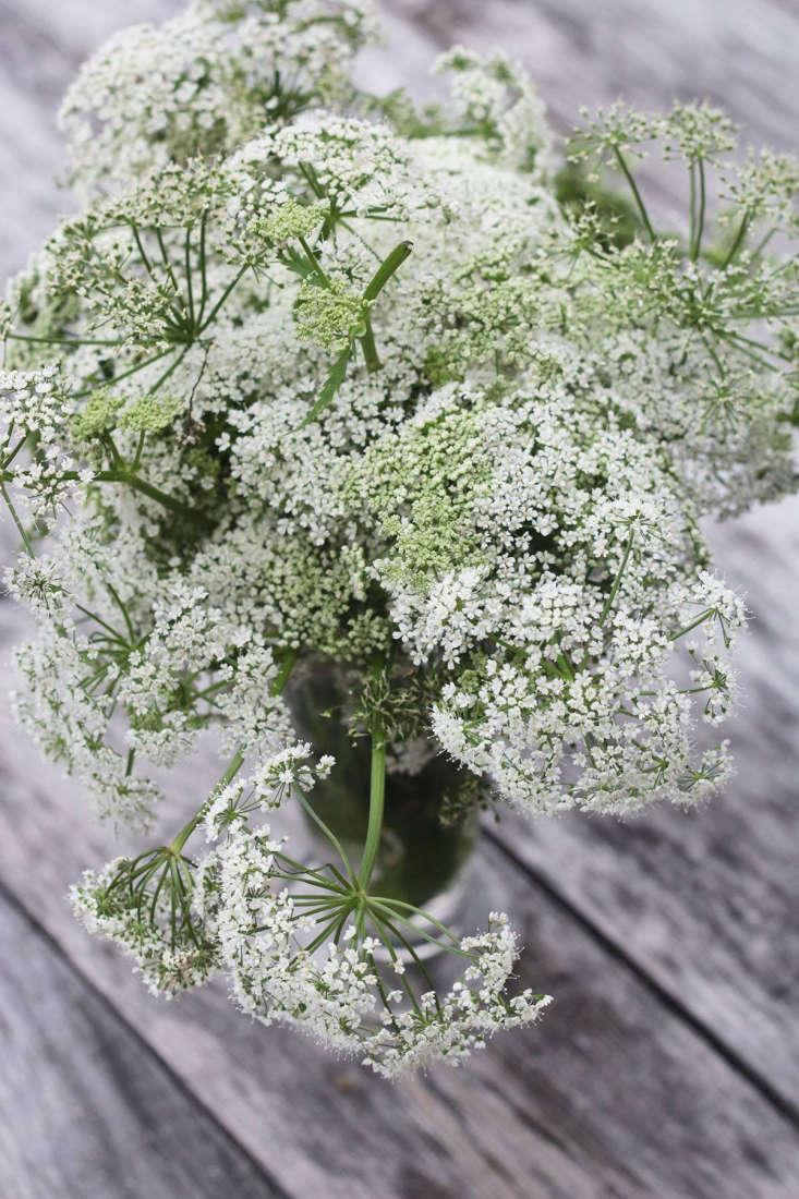 Ground elder flowers by Marie Viljoen
