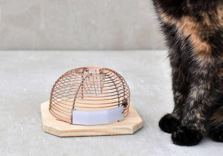 After being captured, mice can be released outdoors. For more, see 5 Favorites: Design-worthy Tools for Keeping Pests at Bay.