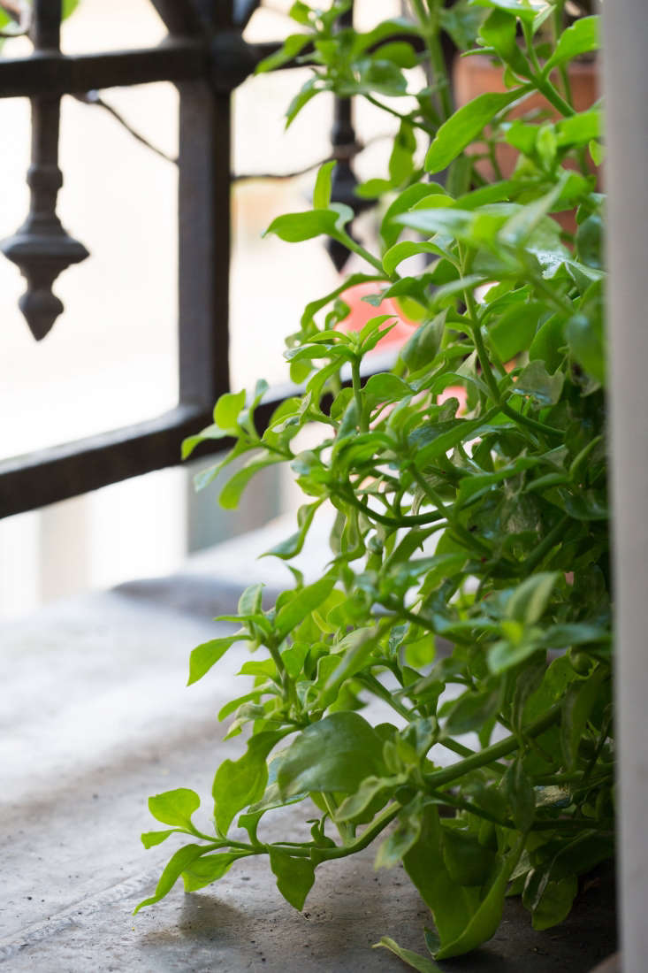 From a wrought iron railing hang balcony planters filled with herbs and flowers.