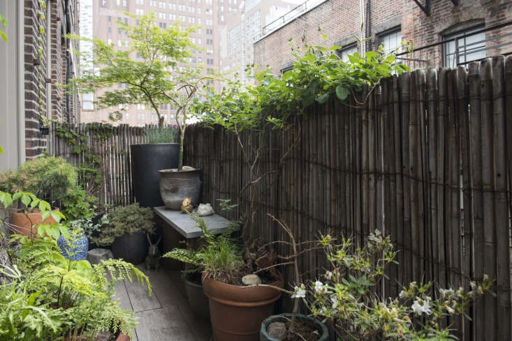 Mix-and-match planters create layers of interest against a bamboo fence on a Soho fire escape.