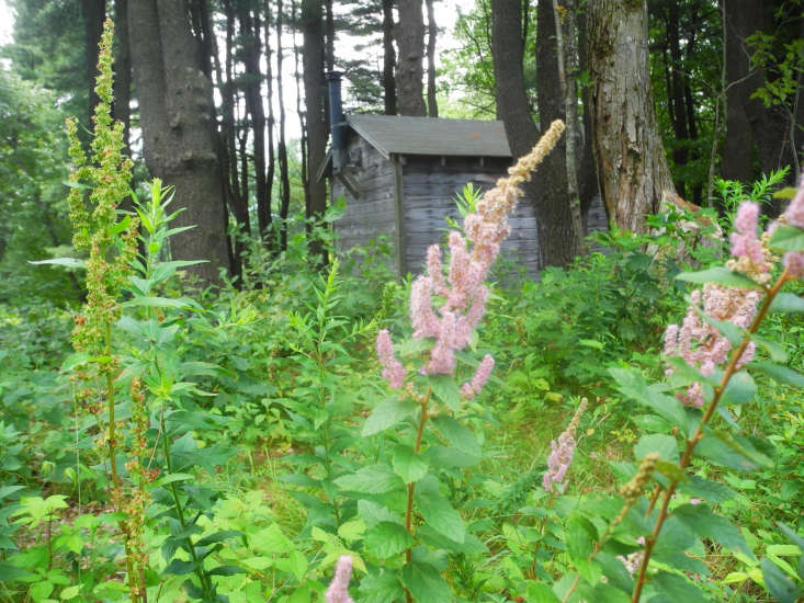 Millay named her property Steepletop after Steeplebush (Spirea tomentosa), a spiky pink wildflower (also known as hardhack) that was growing there in abundance.