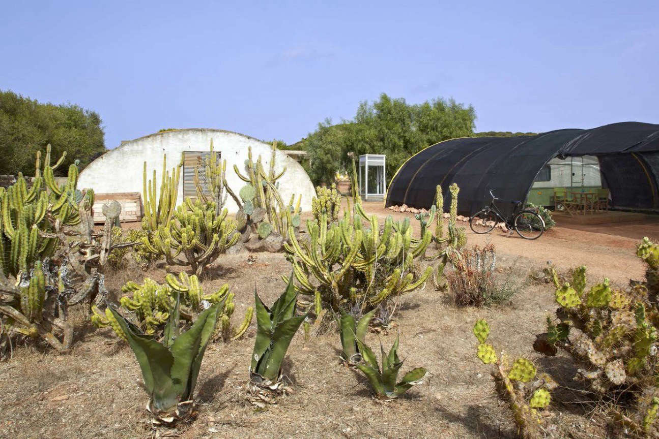Agaves, prickly pears, and other succulents grow around quonset hut greenhouses.