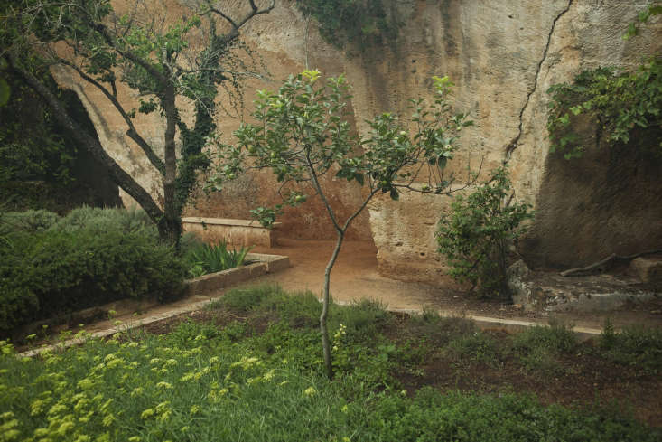 A lemon tree underplanted with native sedum in one of the older hand-cut quarries at Lithica.