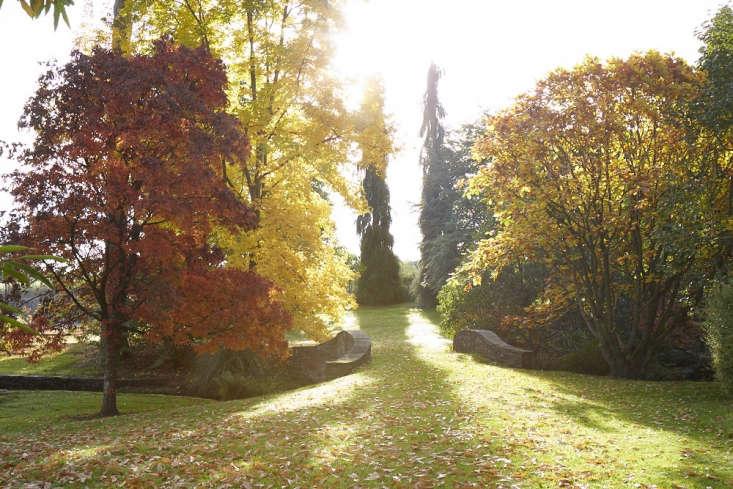 At Llanover Gardens in South Wales: Acer nikoense, Carya cordiformis,