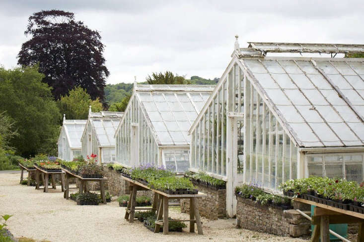 As well as five glasshouses there are two vine houses, built against a south-facing wall for maximum light. Originally intended for peaches and nectarines, one is now occupied by shrubby salvias, sold at the nursery, and the other houses a new café.