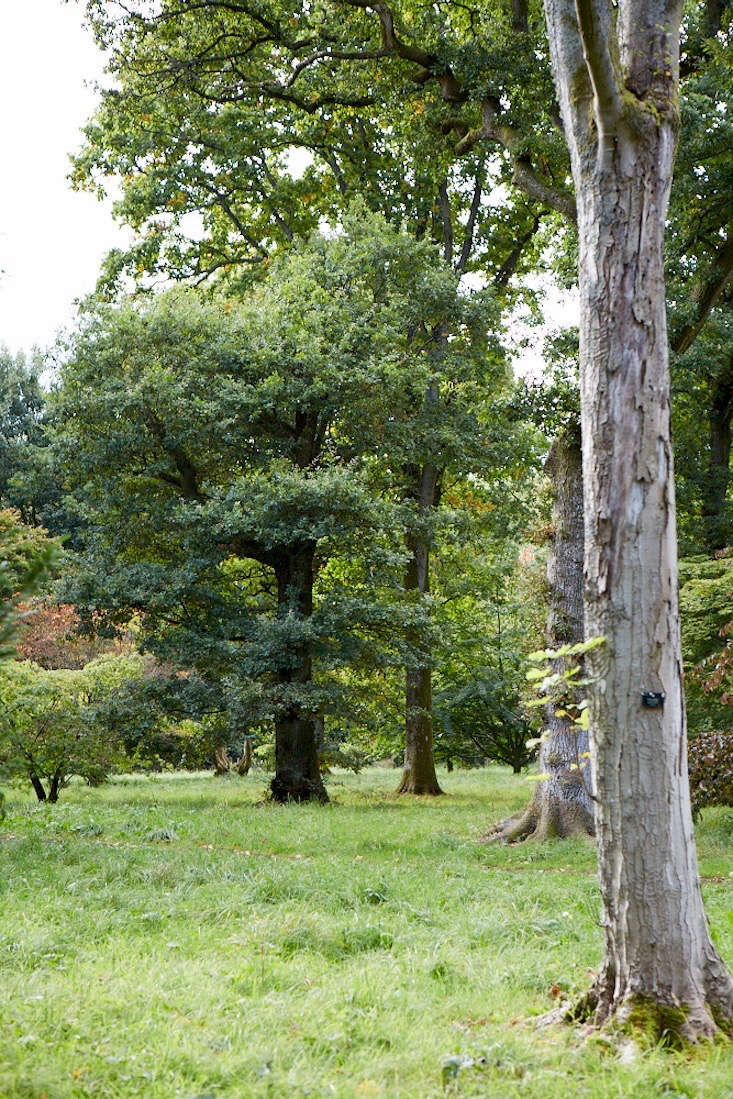 Oak trees in happy companionship.