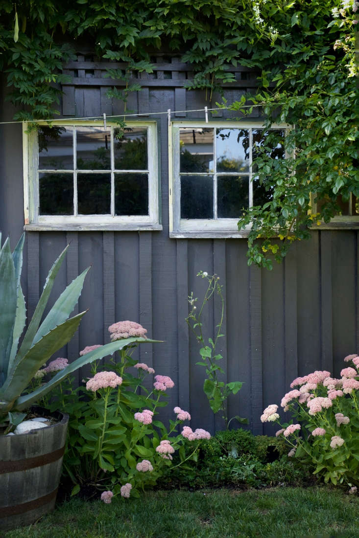 Echoing the plants and palette of the entry: a backyard shed is painted the same shade as the front doors and flanked by more sedum and agave.