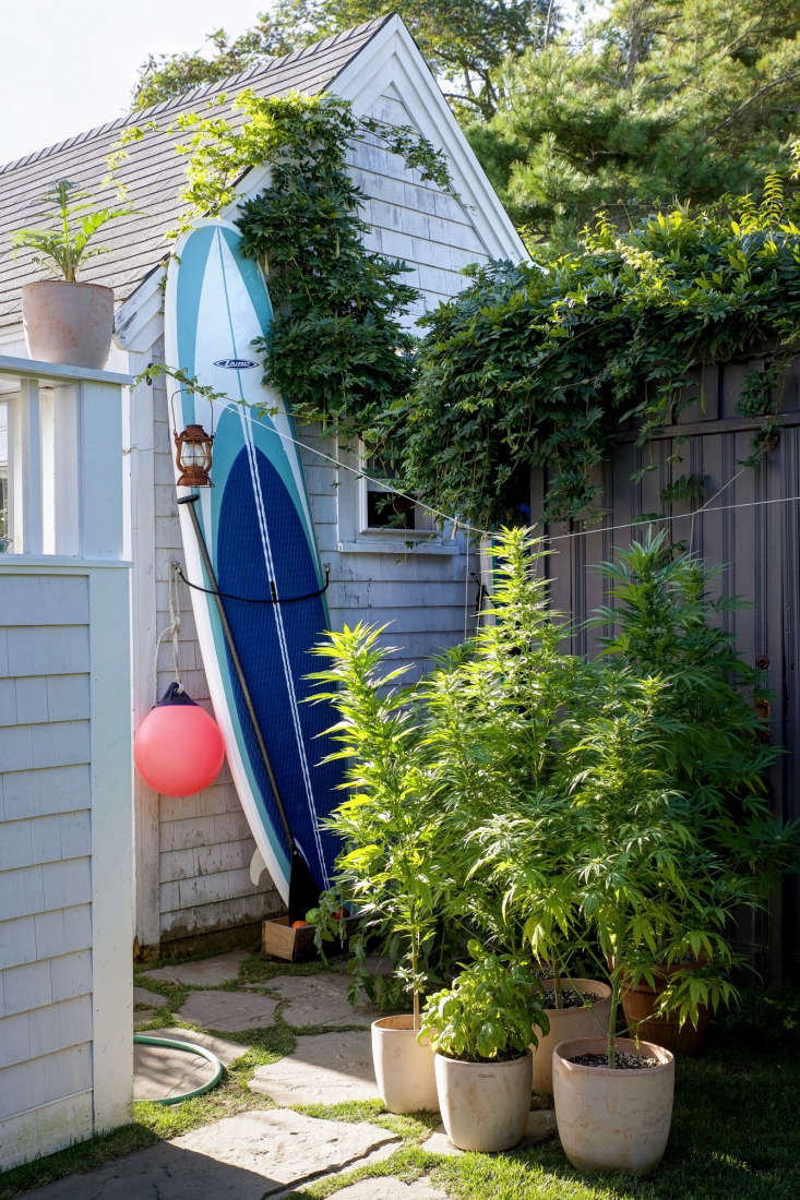 In the far corner of the back garden, a Laird Hamilton paddle/surfboard is flanked by Philip&#8\2\17;s crop of Cannabis sativa (growing marijuana is legal in Massachusetts).