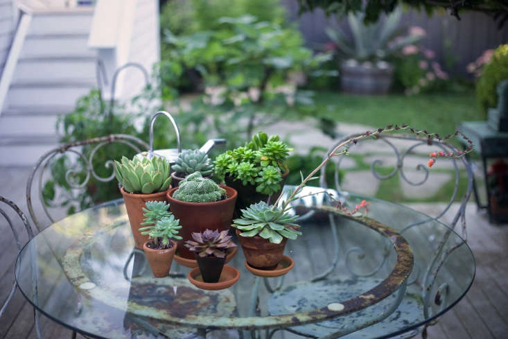 On a vintage French bistro table, a collection of succulents creates a centerpiece that withstands the summer sun.