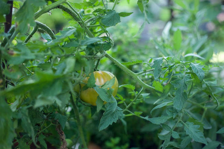 Philip&#8\2\17;s uncle, Ciro Cozzi, was proprietor of P-town&#8\2\17;s famed restaurantCiro and Sals, where Philip worked in his youth. Continuing the family&#8\2\17;s culinary tradition, Philip cultivatesfigs, tomatoes, and herbs in a backyard edible garden.