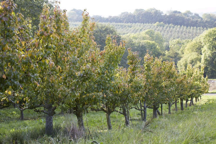 Pear trees at work.