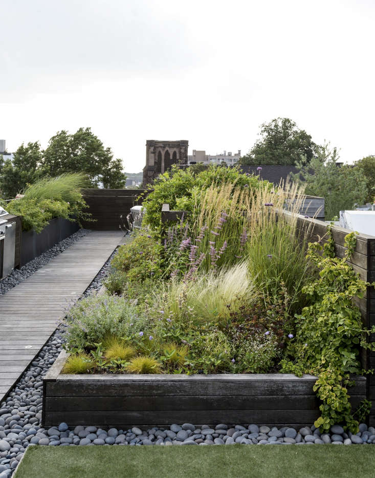 Designer Julie Farris planted a rooftop meadow. Photograph by Matthew Williams for Gardenista. For more, see Ask the Expert: Roof Garden Basics with Designer Julie Farris.